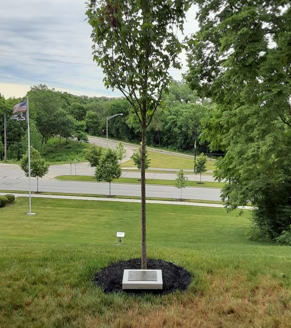 Sigma Chi memorial tree Purdue University